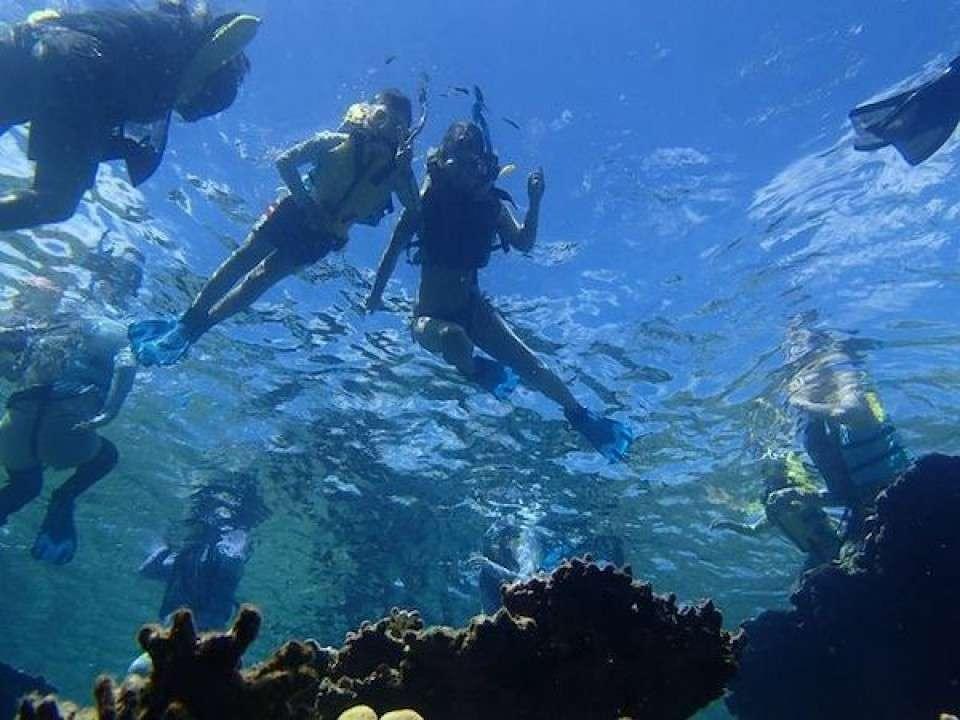石垣島のダイビングは日本有数