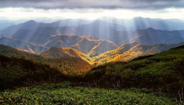 【世界自然遺産ランキング】白神山地の特徴と魅力