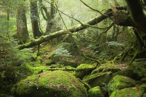 【世界自然遺産ランキング】屋久島の特徴と魅力
