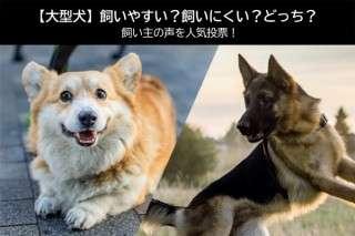 【大型犬】飼いやすい?飼いにくい?どっち?飼い主の声を人気投票!