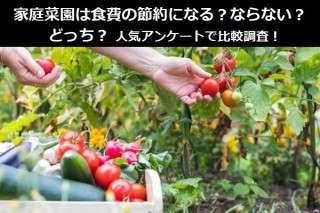 家庭菜園は食費の節約になる?ならない?どっち?人気アンケートで比較調査!