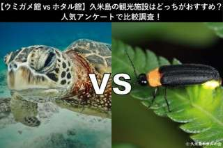 【ウミガメ館 vs ホタル館】久米島の観光施設はどっちがおすすめ?人気アンケートで比較調査!