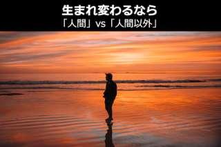 生まれ変わるなら「人間」vs「人間以外」どっち?人気投票中!