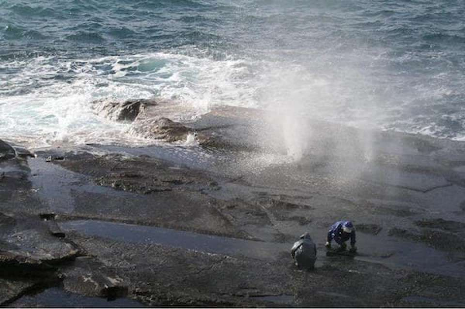 島根県の名物「十六島海苔」