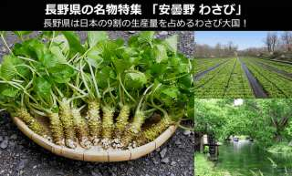 【長野県のお土産・名物】「安曇野わさび」が日本一である理由!~安曇野わさびは辛味・風味が段違い~