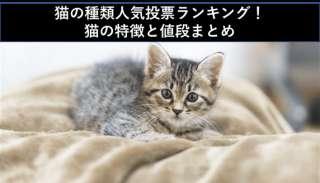 【2020】猫の種類人気投票ランキング!猫の特徴と値段まとめ