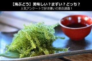 【海ぶどう】美味しい?まずい?どっち?人気アンケートで好き嫌いの割合調査!